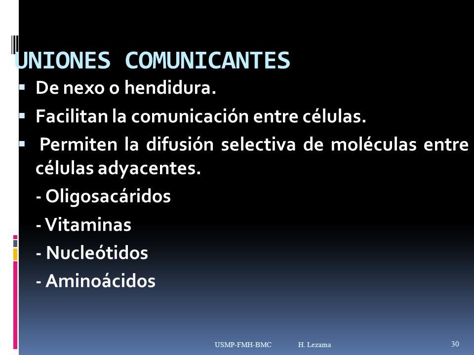 UNIONES COMUNICANTES De nexo o hendidura.Facilitan la comunicación entre células.