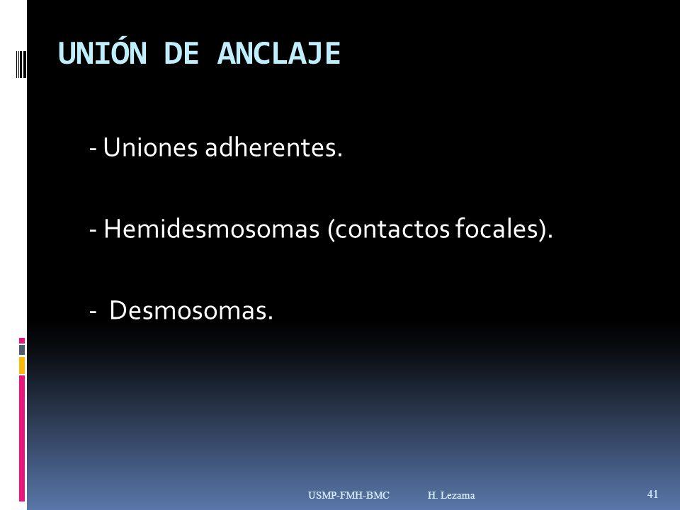 UNIÓN DE ANCLAJE - Uniones adherentes.- Hemidesmosomas (contactos focales).