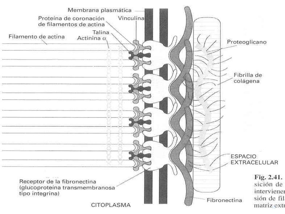 Contactos focalesContactos focales USMP-FMH-BMC H. Lezama 58