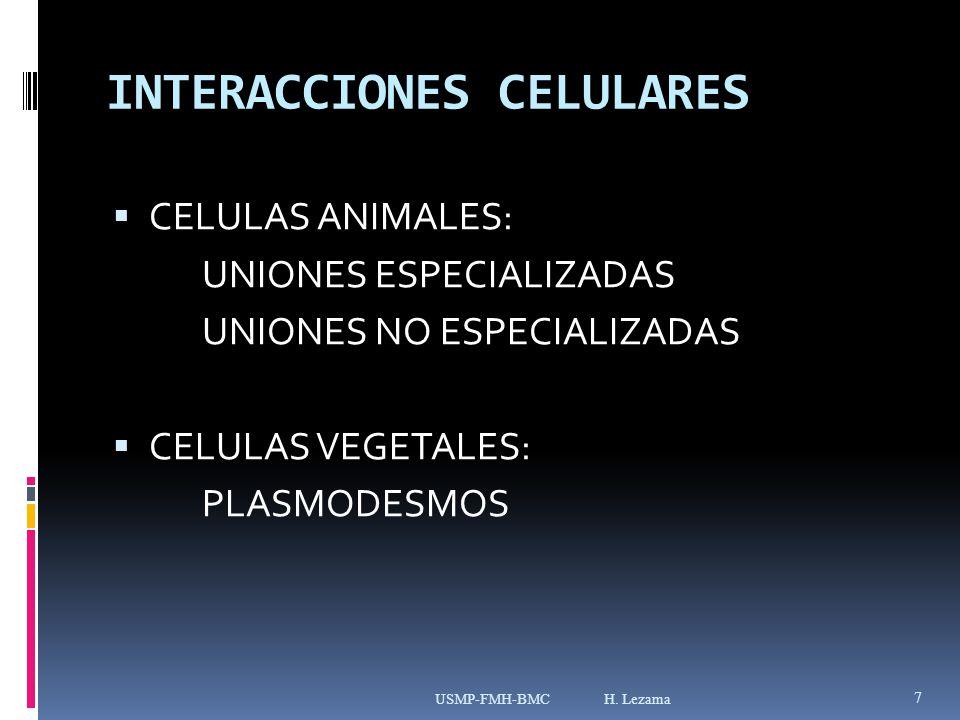 INTERACCIONES CELULARES CELULAS ANIMALES: UNIONES ESPECIALIZADAS UNIONES NO ESPECIALIZADAS CELULAS VEGETALES: PLASMODESMOS USMP-FMH-BMC H.