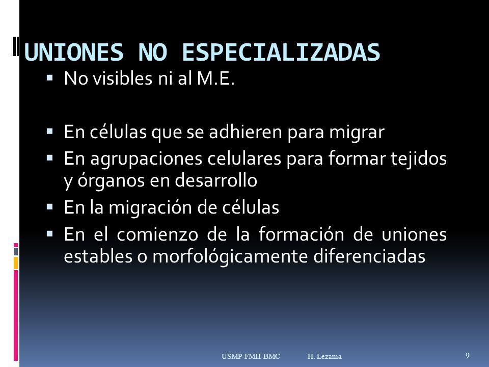 UNIONES NO ESPECIALIZADAS No visibles ni al M.E.