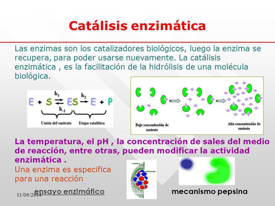 Catálisis enzimática mecanismo pepsinaensayo enzimático La temperatura, el pH, la concentración de sales del medio de reacción, entre otras, pueden mo