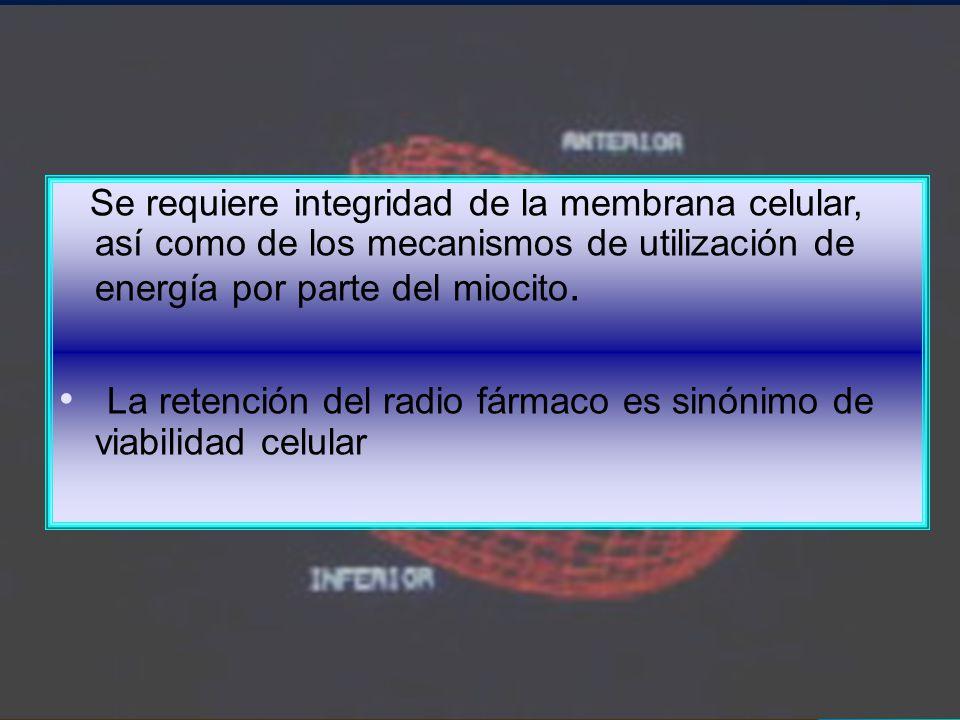 Se requiere integridad de la membrana celular, así como de los mecanismos de utilización de energía por parte del miocito. La retención del radio fárm