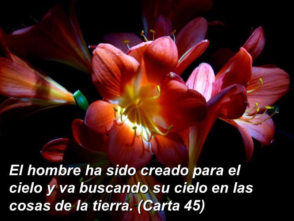 Y el hombre, ¿que todavía se rebele contra su Dios, viendo los animales, las flores, los pájaros y tantísimas cosas que cantan la belleza de Dios?(Car
