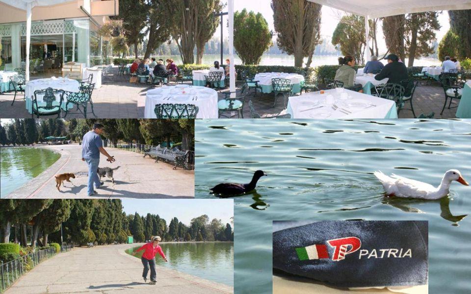 Lago Mayor en Chapultepec, México D.F. con patos locales y otros que desde el Cánadá nos visitan