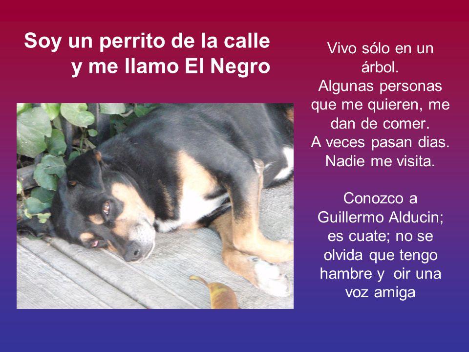 perrito que vive en el arbol Vivo en Torrente esq.