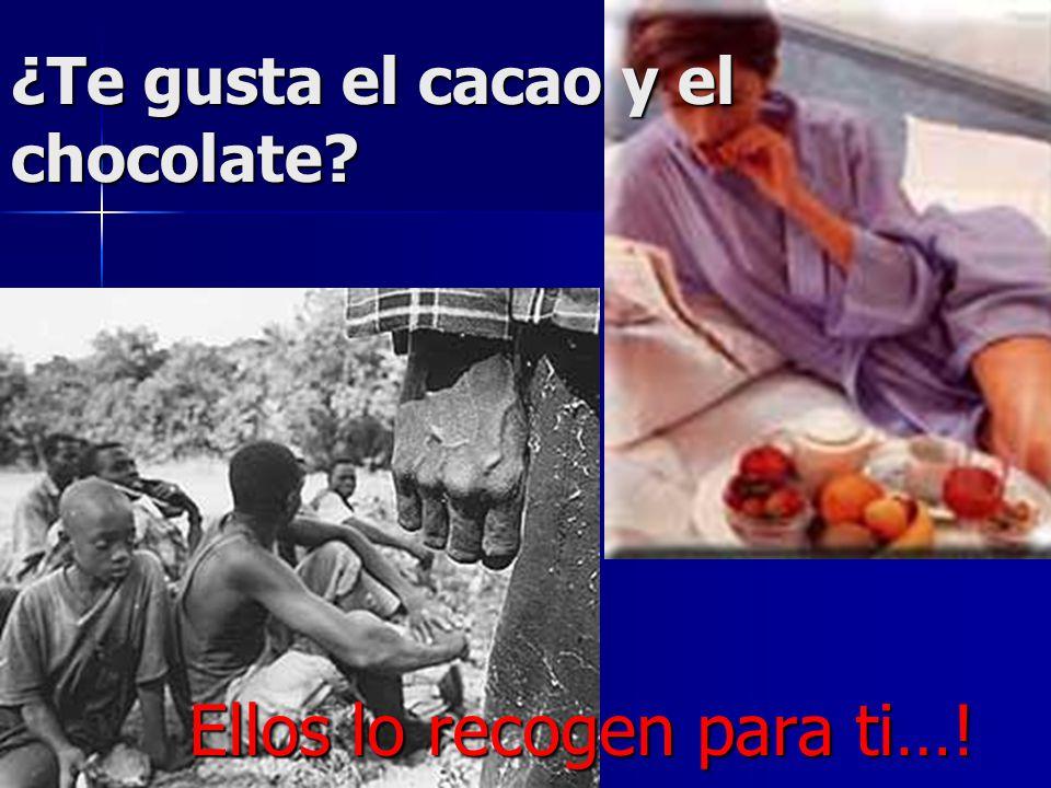 ¿Te gusta el cacao y el chocolate? Ellos lo recogen para ti…!
