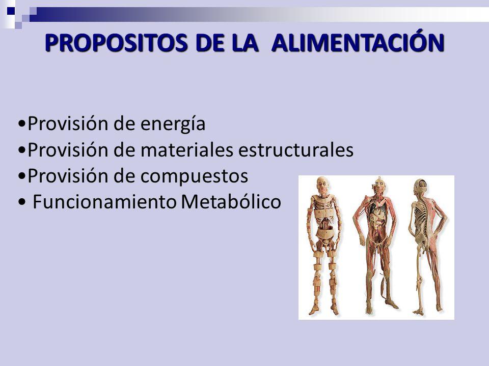 PROPOSITOS DE LA ALIMENTACIÓN Provisión de energía Provisión de materiales estructurales Provisión de compuestos Funcionamiento Metabólico