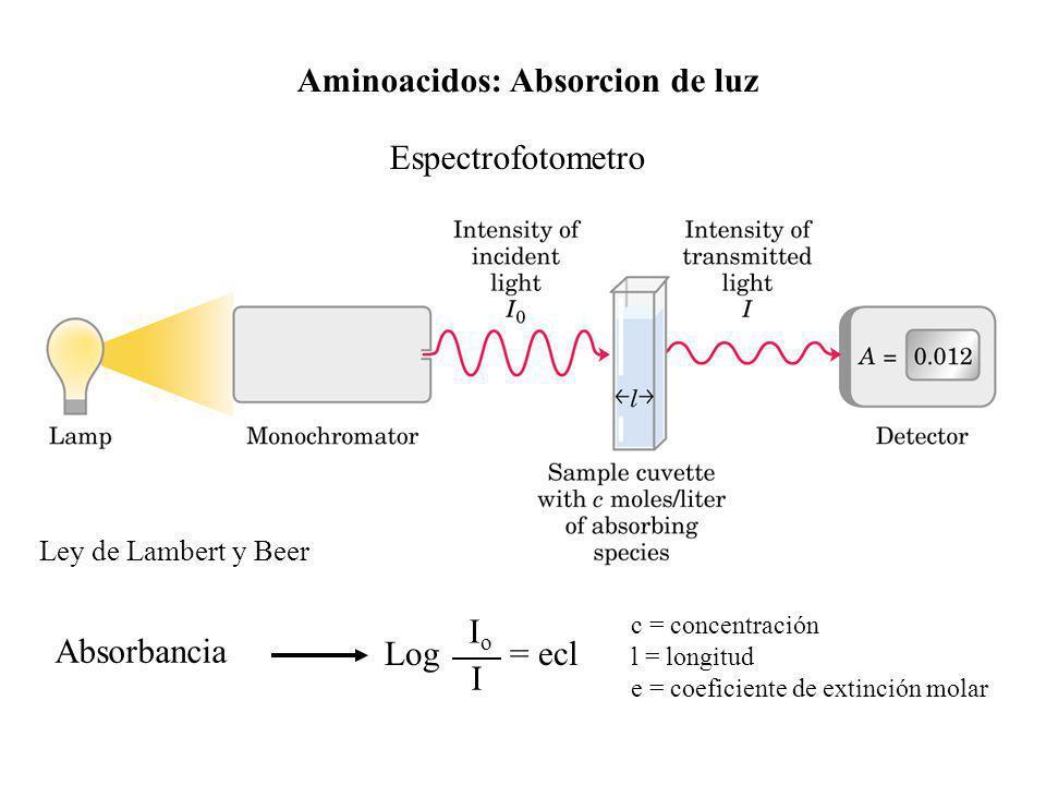 Aminoacidos: Absorcion de luz Espectrofotometro Log = ecl IoIo I c = concentración l = longitud e = coeficiente de extinción molar Ley de Lambert y Be