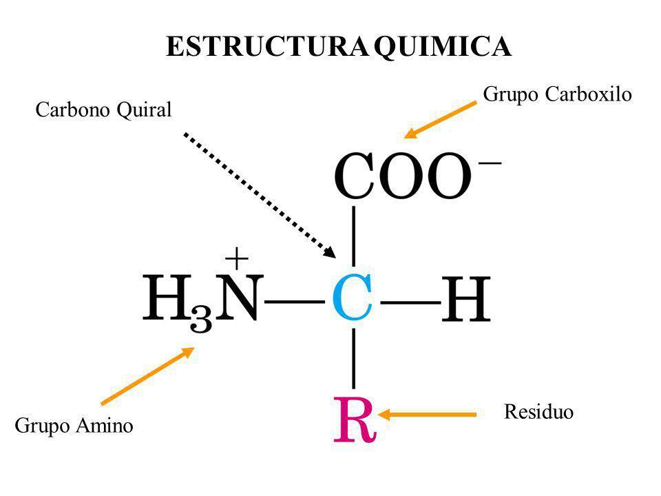 ESTRUCTURA QUIMICA Carbono Quiral Grupo Amino Grupo Carboxilo Residuo