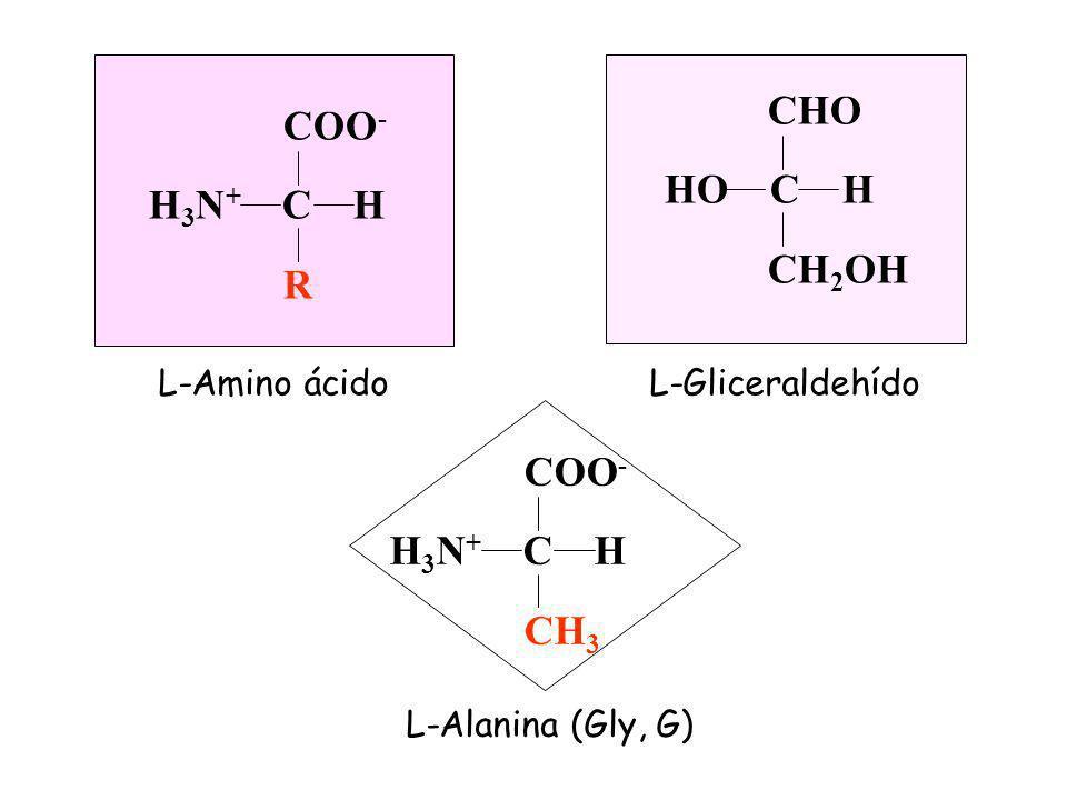 L-Amino ácido COO - H 3 N + C H R CHO HO C H CH 2 OH L-Gliceraldehído COO - H 3 N + C H CH 3 L-Alanina (Gly, G)