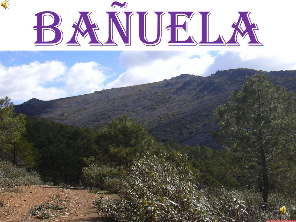 SIERRA MORENA: Está al sur de la Meseta. Su pico más alto es el Bañuela.