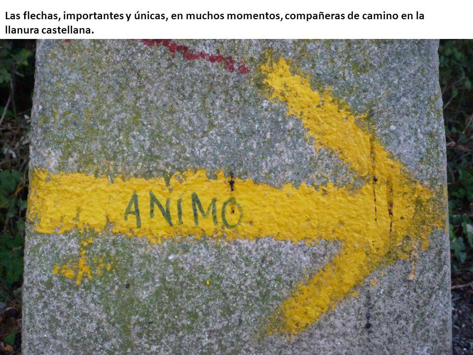 Las flechas, importantes y únicas, en muchos momentos, compañeras de camino en la llanura castellana.
