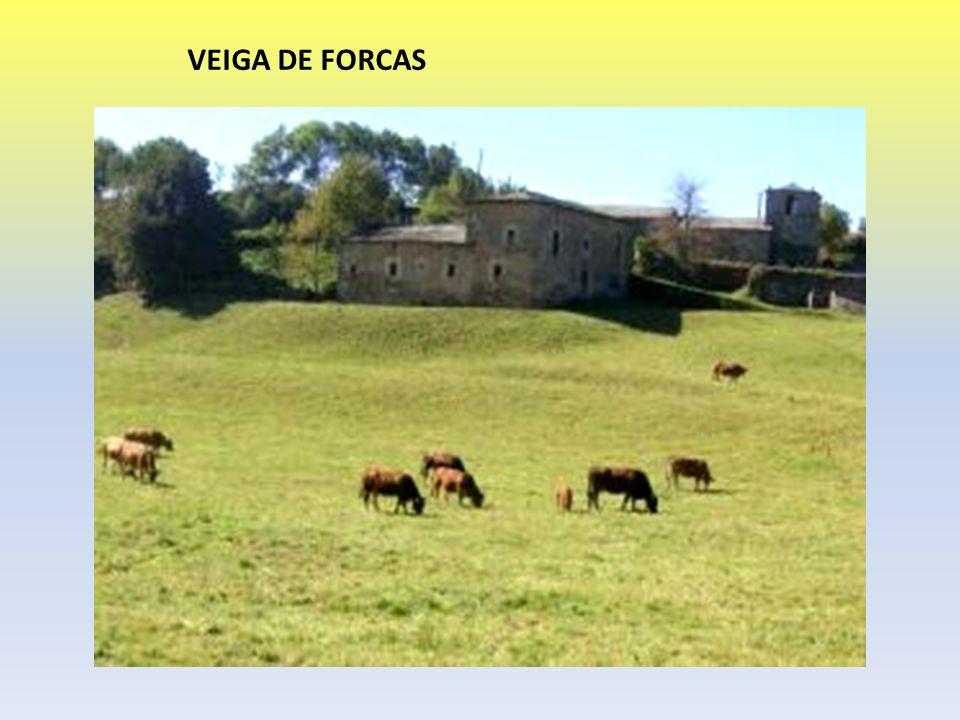 VEIGA DE FORCAS