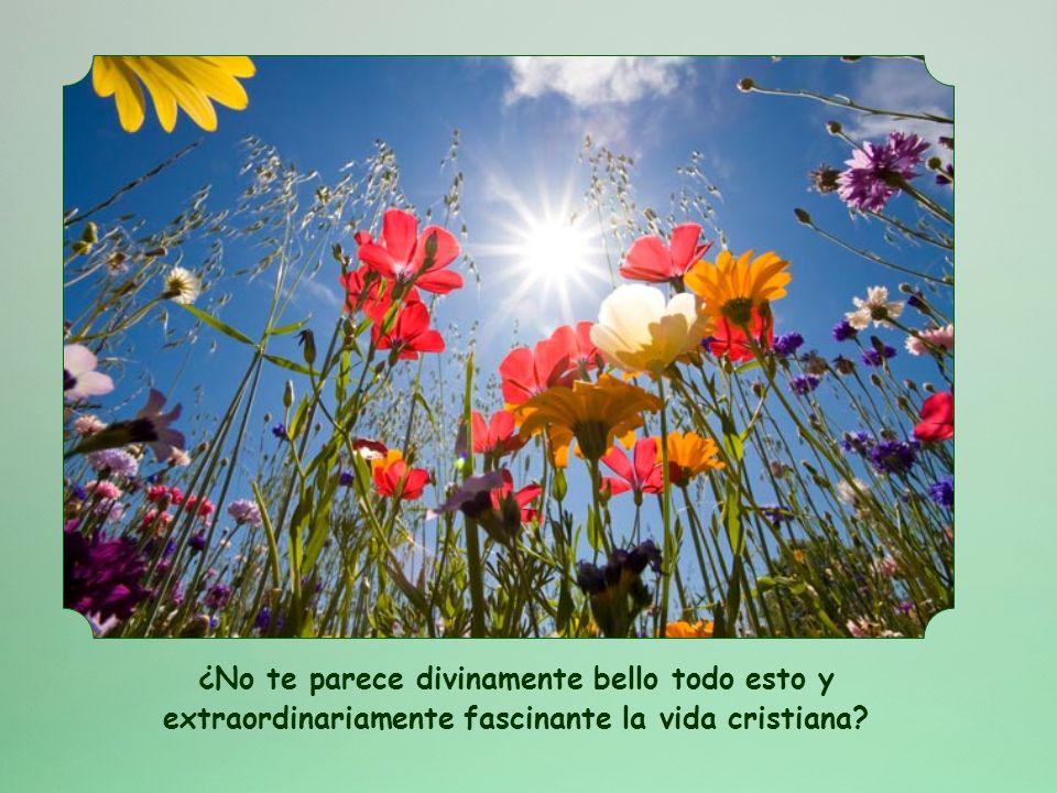 Por este amor, el cielo y la tierra están conectados como por una gran corriente. Por este amor, la comunidad cristiana es elevada a la esfera de Dios
