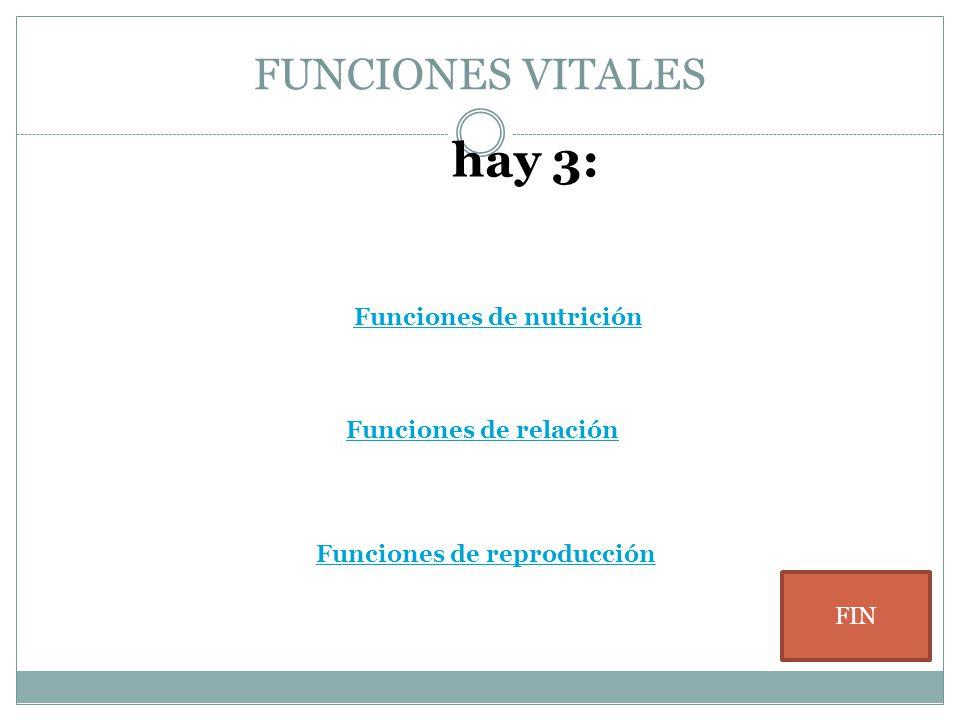 FUNCIONES VITALES Funciones de nutrición Funciones de relación hay 3: Funciones de reproducción FIN