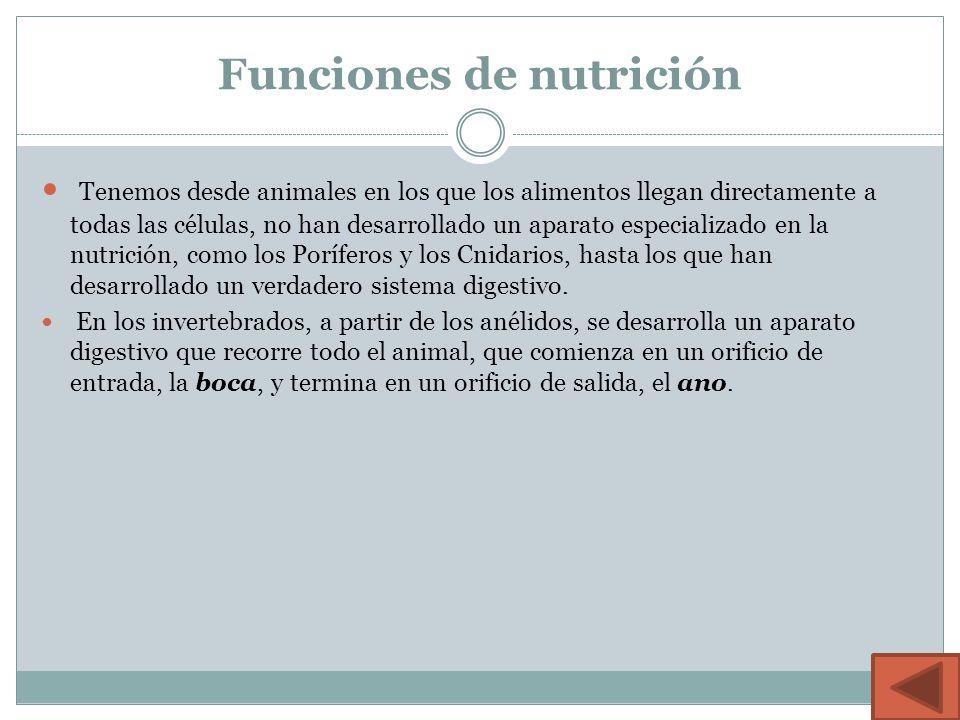 Funciones de nutrición Tenemos desde animales en los que los alimentos llegan directamente a todas las células, no han desarrollado un aparato especializado en la nutrición, como los Poríferos y los Cnidarios, hasta los que han desarrollado un verdadero sistema digestivo.