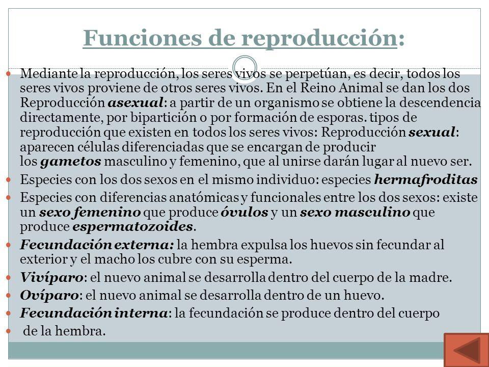 Funciones de reproducción: Mediante la reproducción, los seres vivos se perpetúan, es decir, todos los seres vivos proviene de otros seres vivos.