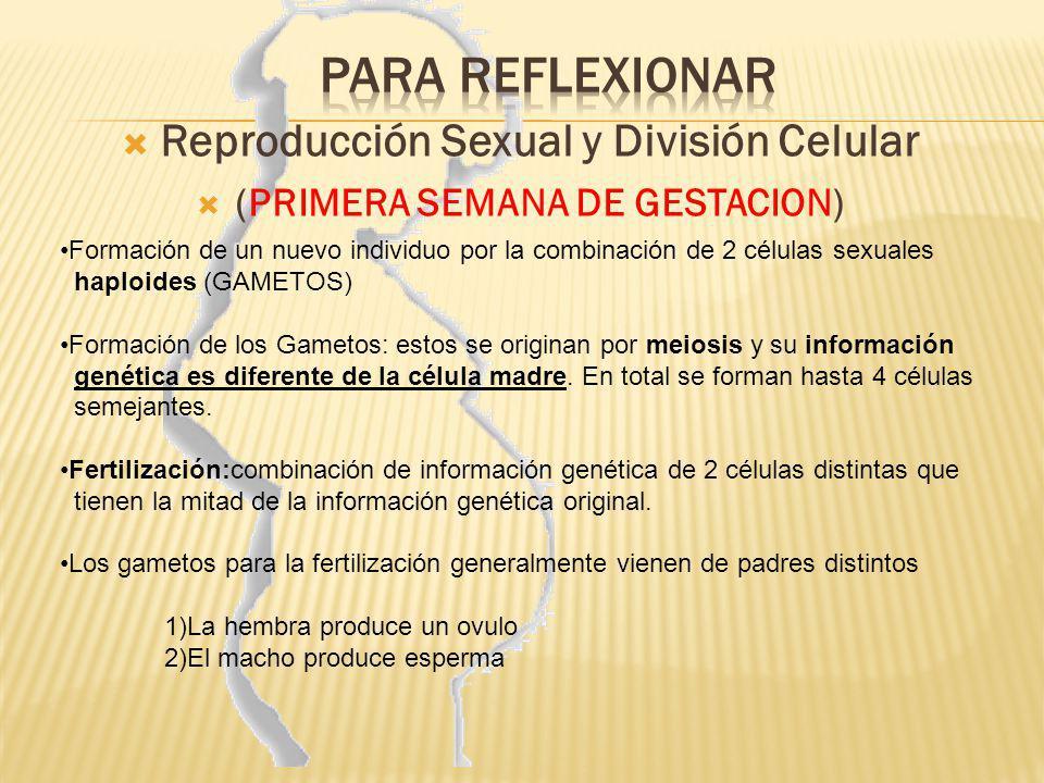 Reproducción Sexual y división celular Ambos gametos son haploides, con un juego, la mitad de los cromosomas El individuo se llama Cigoto, con dos juegos, la totalidad de cromosomas (Diploide) pero con una información compartida, no identica a los progenitores.