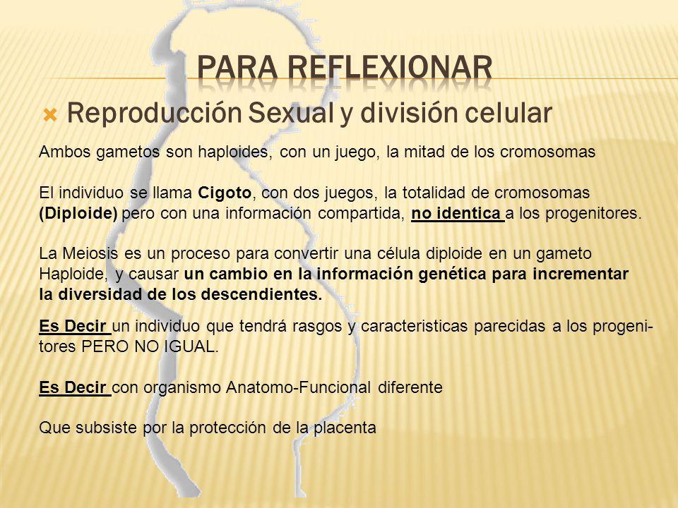 Reproducción Sexual y división celular Ambos gametos son haploides, con un juego, la mitad de los cromosomas El individuo se llama Cigoto, con dos jue