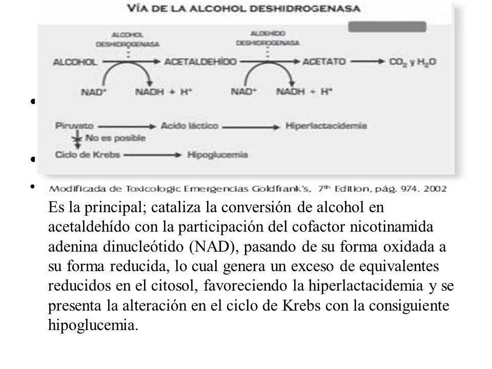 1. La vía de la enzima alcohol deshidrogenasa: Es la principal; cataliza la conversión de alcohol en acetaldehído con la participación del cofactor ni