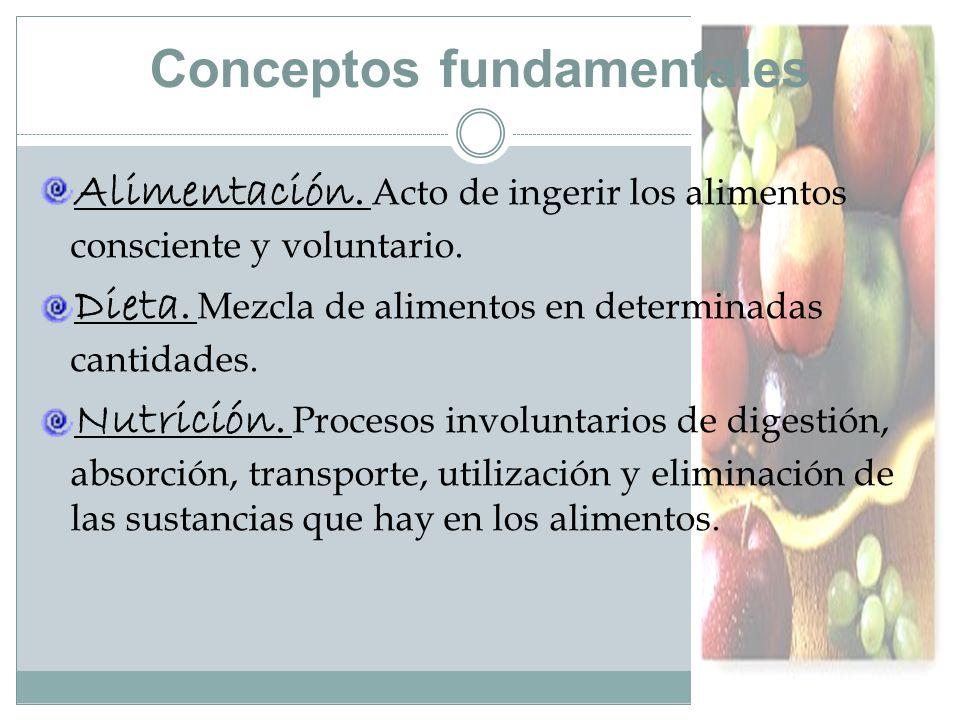 Conceptos fundamentales Alimentación.Acto de ingerir los alimentos consciente y voluntario.