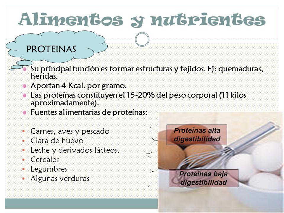 Alimentos y nutrientes Su principal función es formar estructuras y tejidos.