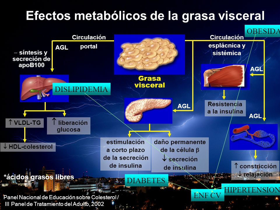 OBESIDAD Y CORAZON Efectos metabólicos de la grasa visceral AGL Grasa visceral VLDL-TG síntesis y secreción de apoB100 HDL-colesterol *ácidos grasos l