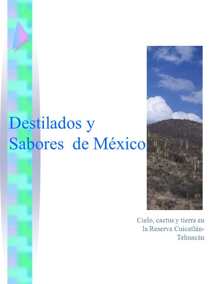 Destilados y Sabores de México Cielo, cactus y tierra en la Reserva Cuicatlán- Tehuacán