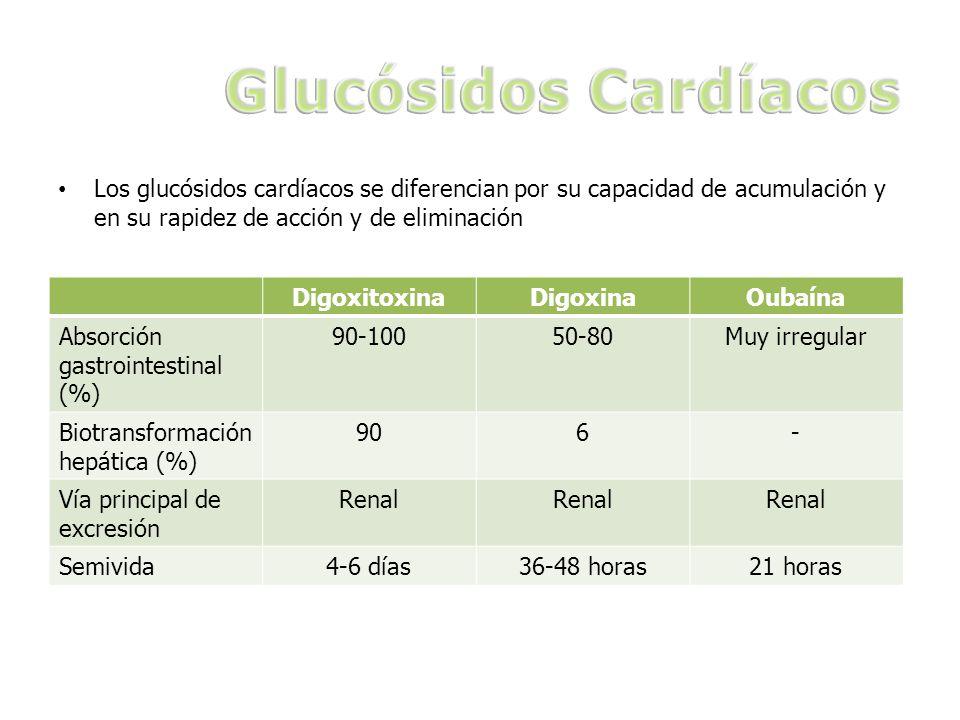 Los glucósidos cardíacos se diferencian por su capacidad de acumulación y en su rapidez de acción y de eliminación DigoxitoxinaDigoxinaOubaína Absorci
