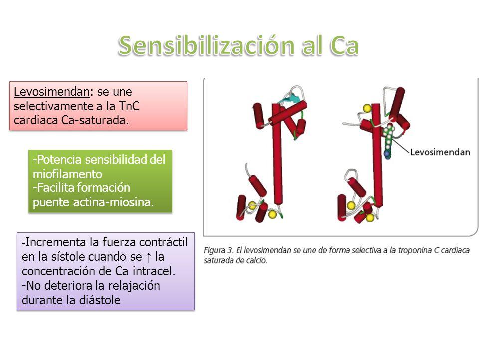 Levosimendan: se une selectivamente a la TnC cardiaca Ca-saturada. -Potencia sensibilidad del miofilamento -Facilita formación puente actina-miosina.