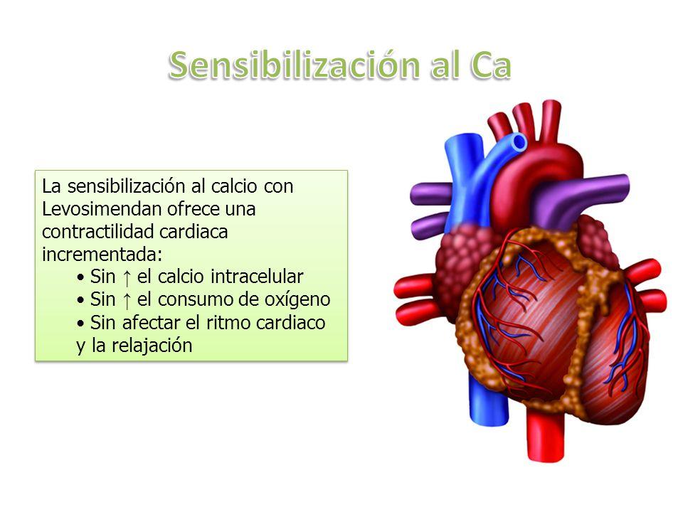 La sensibilización al calcio con Levosimendan ofrece una contractilidad cardiaca incrementada: Sin el calcio intracelular Sin el consumo de oxígeno Sin afectar el ritmo cardiaco y la relajación La sensibilización al calcio con Levosimendan ofrece una contractilidad cardiaca incrementada: Sin el calcio intracelular Sin el consumo de oxígeno Sin afectar el ritmo cardiaco y la relajación