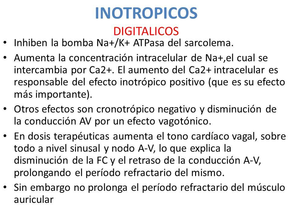 INOTROPICOS DIGITALICOS Inhiben la bomba Na+/K+ ATPasa del sarcolema. Aumenta la concentración intracelular de Na+,el cual se intercambia por Ca2+. El