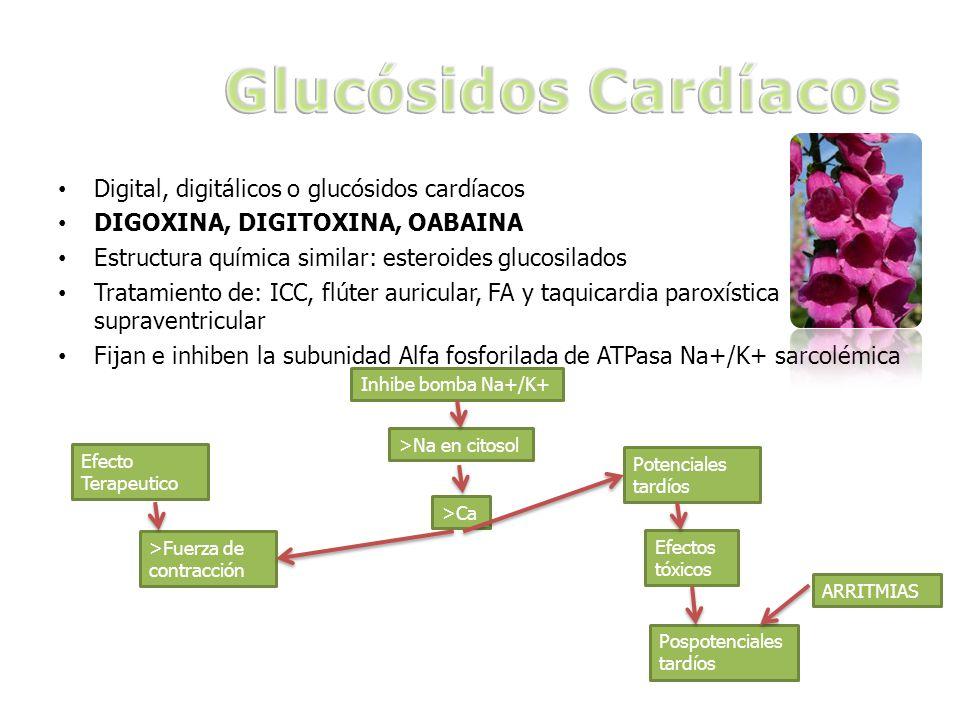 Digital, digitálicos o glucósidos cardíacos DIGOXINA, DIGITOXINA, OABAINA Estructura química similar: esteroides glucosilados Tratamiento de: ICC, flúter auricular, FA y taquicardia paroxística supraventricular Fijan e inhiben la subunidad Alfa fosforilada de ATPasa Na+/K+ sarcolémica Inhibe bomba Na+/K+ >Na en citosol >Ca >Fuerza de contracción Potenciales tardíos Efectos tóxicos Pospotenciales tardíos ARRITMIAS Efecto Terapeutico
