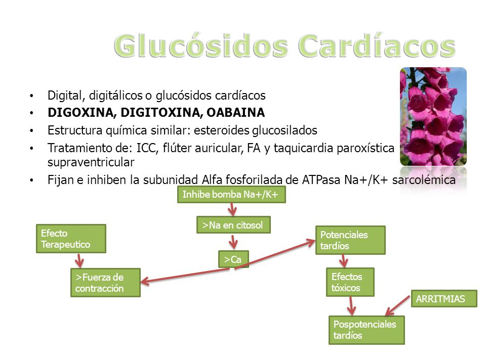 Digital, digitálicos o glucósidos cardíacos DIGOXINA, DIGITOXINA, OABAINA Estructura química similar: esteroides glucosilados Tratamiento de: ICC, flú