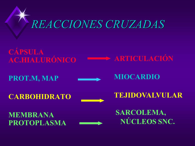 REACCIONES CRUZADAS CÁPSULA AC.HIALURÓNICO PROT.M, MAP CARBOHIDRATO MEMBRANA PROTOPLASMA ARTICULACIÓN MIOCARDIO TEJIDOVALVULAR SARCOLEMA, NÚCLEOS SNC.