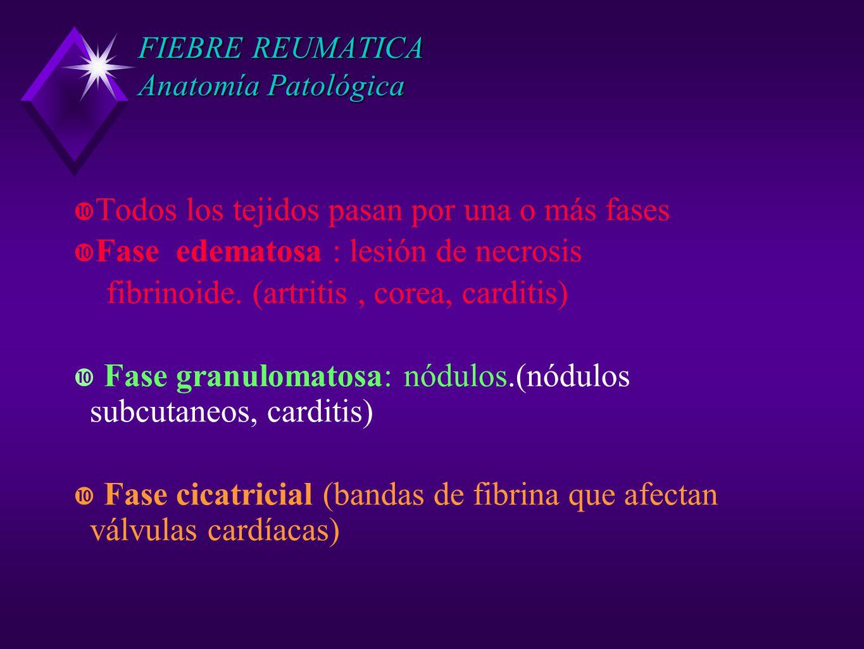 FIEBRE REUMATICA Anatomía Patológica Todos los tejidos pasan por una o más fases Fase edematosa : lesión de necrosis fibrinoide. (artritis, corea, car