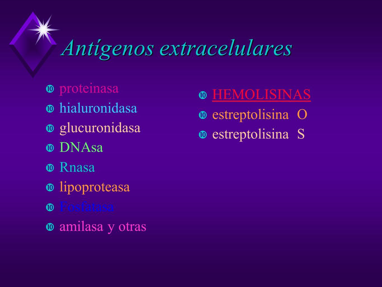 Antígenos extracelulares proteinasa hialuronidasa glucuronidasa DNAsa Rnasa lipoproteasa Fosfatasa amilasa y otras HEMOLISINAS estreptolisina O estrep