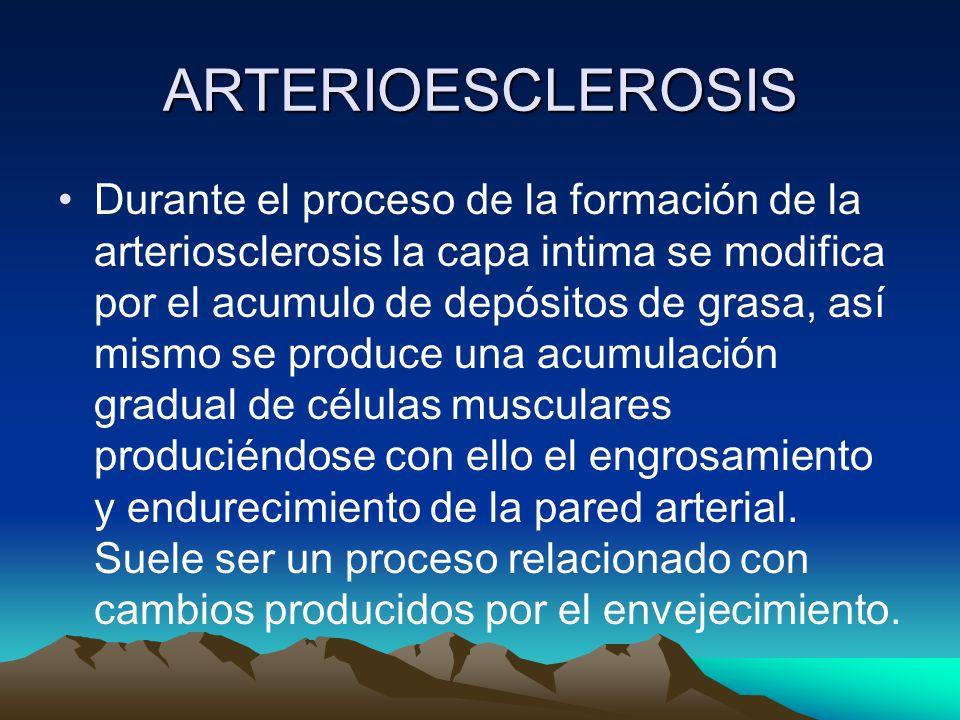 ARTERIOESCLEROSIS Durante el proceso de la formación de la arteriosclerosis la capa intima se modifica por el acumulo de depósitos de grasa, así mismo se produce una acumulación gradual de células musculares produciéndose con ello el engrosamiento y endurecimiento de la pared arterial.