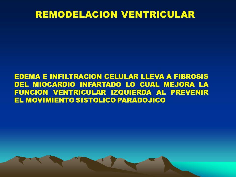REMODELACION VENTRICULAR EDEMA E INFILTRACION CELULAR LLEVA A FIBROSIS DEL MIOCARDIO INFARTADO LO CUAL MEJORA LA FUNCION VENTRICULAR IZQUIERDA AL PREVENIR EL MOVIMIENTO SISTOLICO PARADOJICO