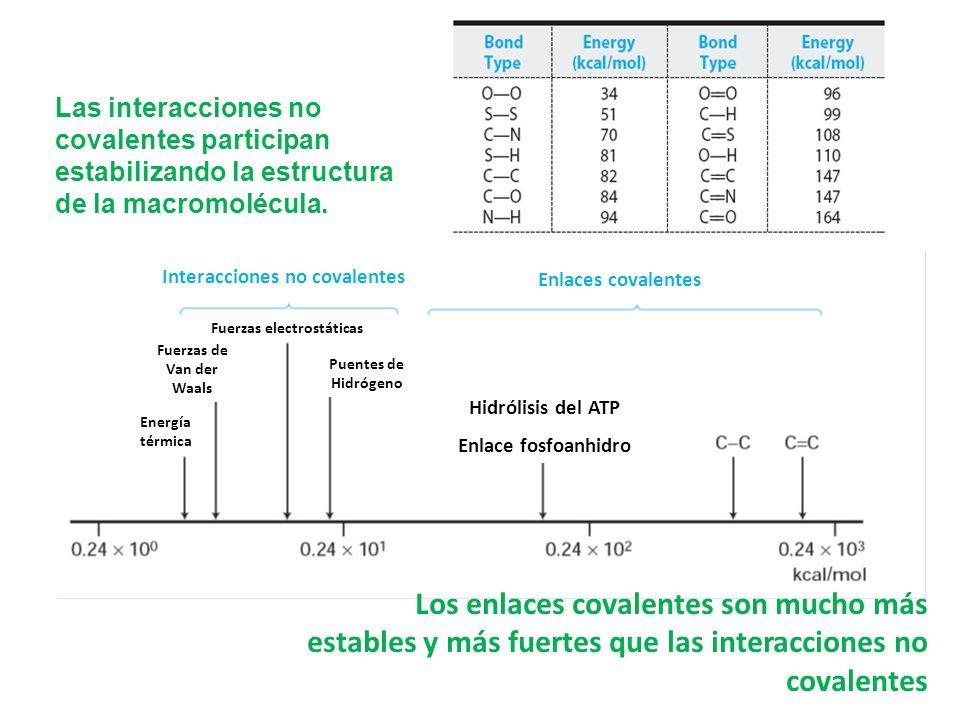 Energía térmica Fuerzas de Van der Waals Fuerzas electrostáticas Puentes de Hidrógeno Hidrólisis del ATP Enlace fosfoanhidro Enlaces covalentes Intera