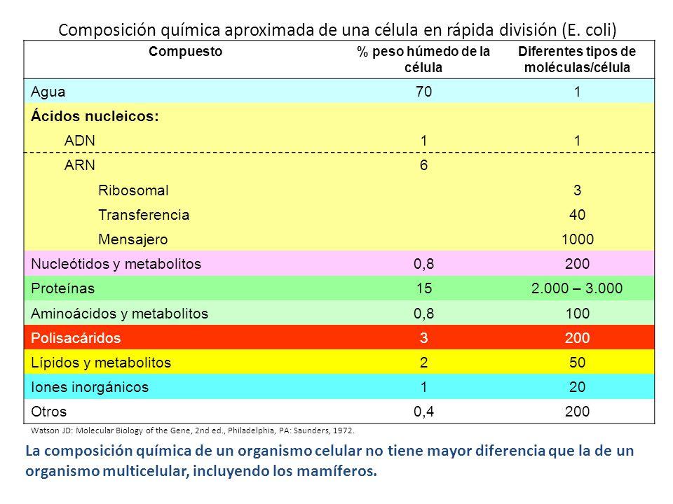 Composición química aproximada de una célula en rápida división (E. coli) Compuesto% peso húmedo de la célula Diferentes tipos de moléculas/célula Agu