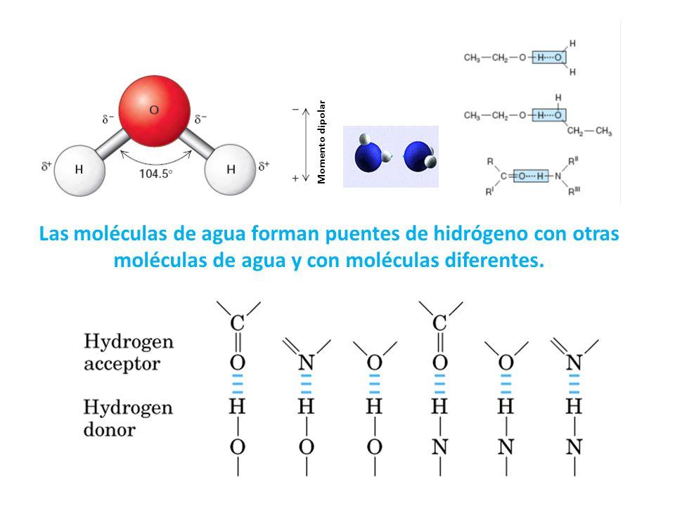 Las moléculas de agua forman puentes de hidrógeno con otras moléculas de agua y con moléculas diferentes. Momento dipolar