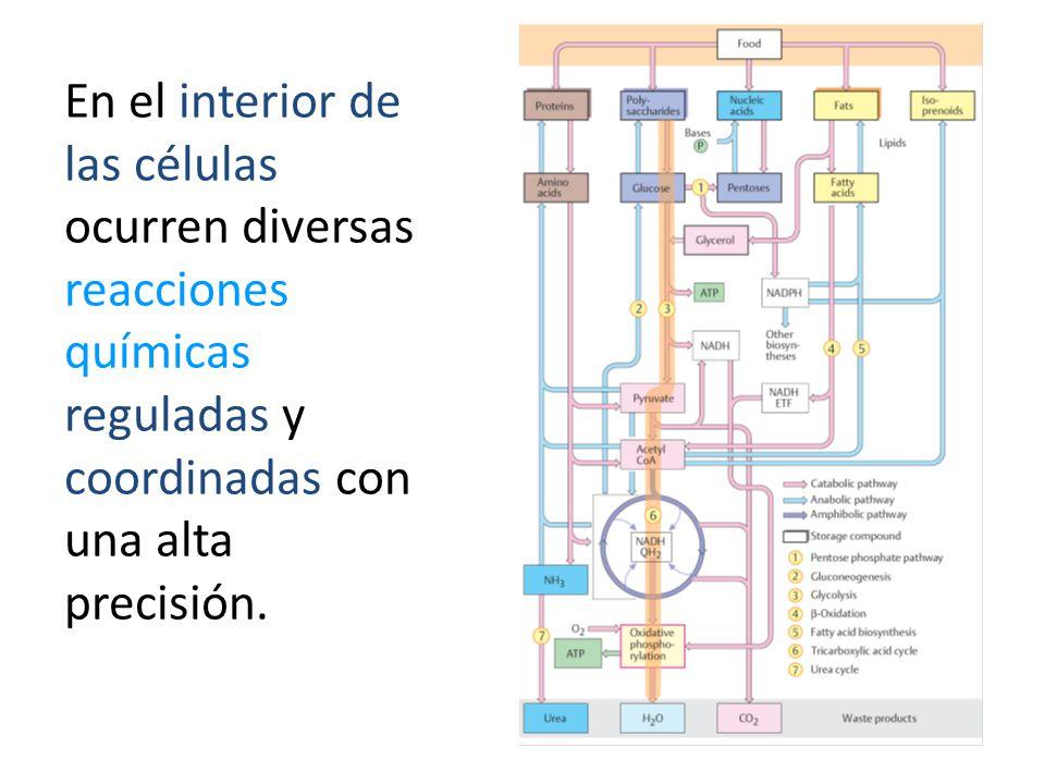 Las interacciones entre el agua y otros constituyentes de la célula es de importancia central en la química biológica.