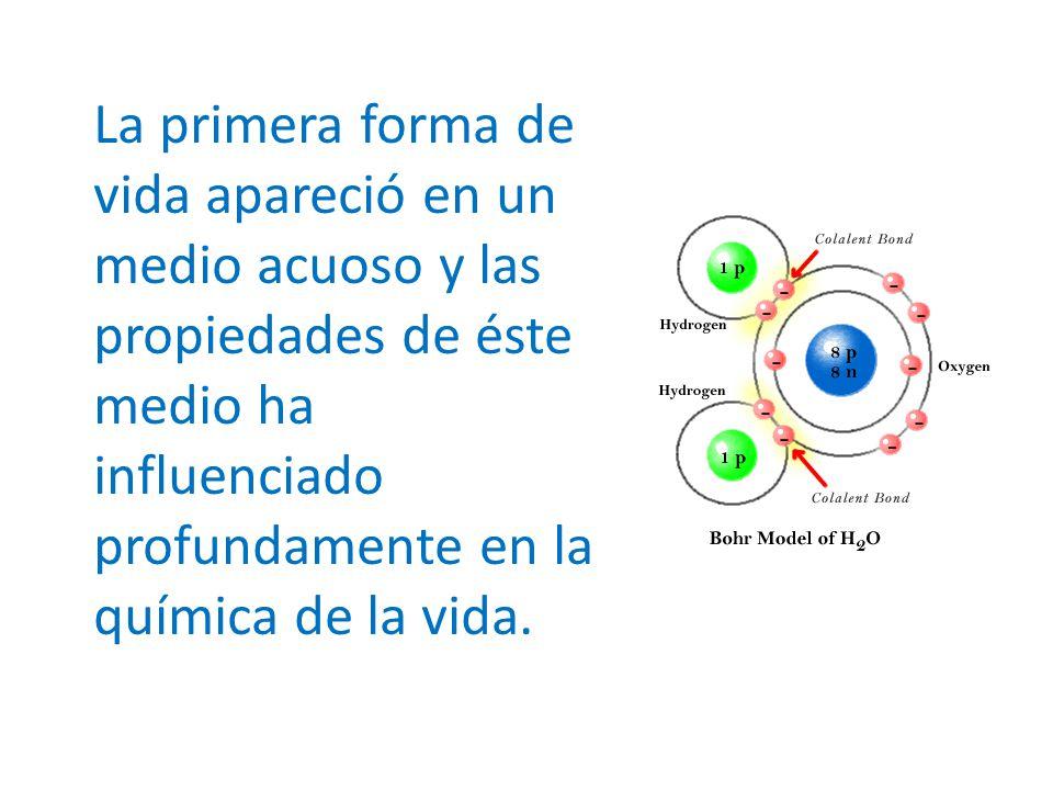 Los iones tienen una distribución característica fuera y dentro de la célula.