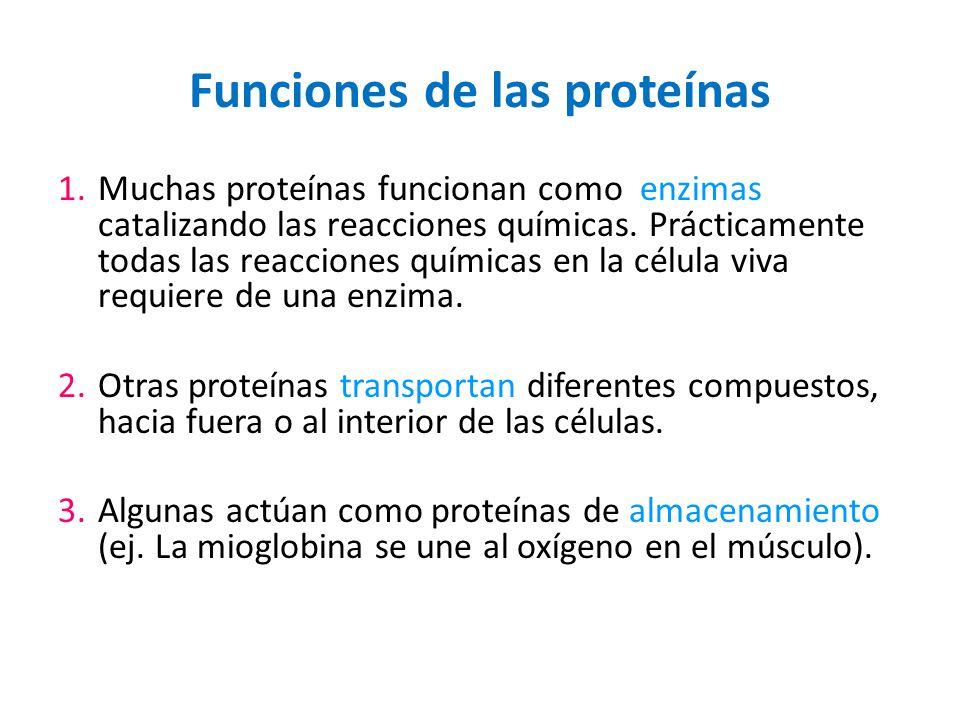 Funciones de las proteínas 1.Muchas proteínas funcionan como enzimas catalizando las reacciones químicas. Prácticamente todas las reacciones químicas