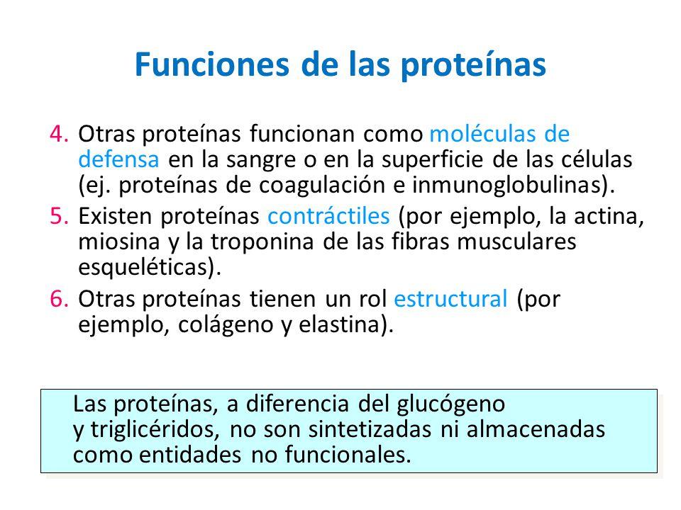 Funciones de las proteínas 4.Otras proteínas funcionan como moléculas de defensa en la sangre o en la superficie de las células (ej. proteínas de coag