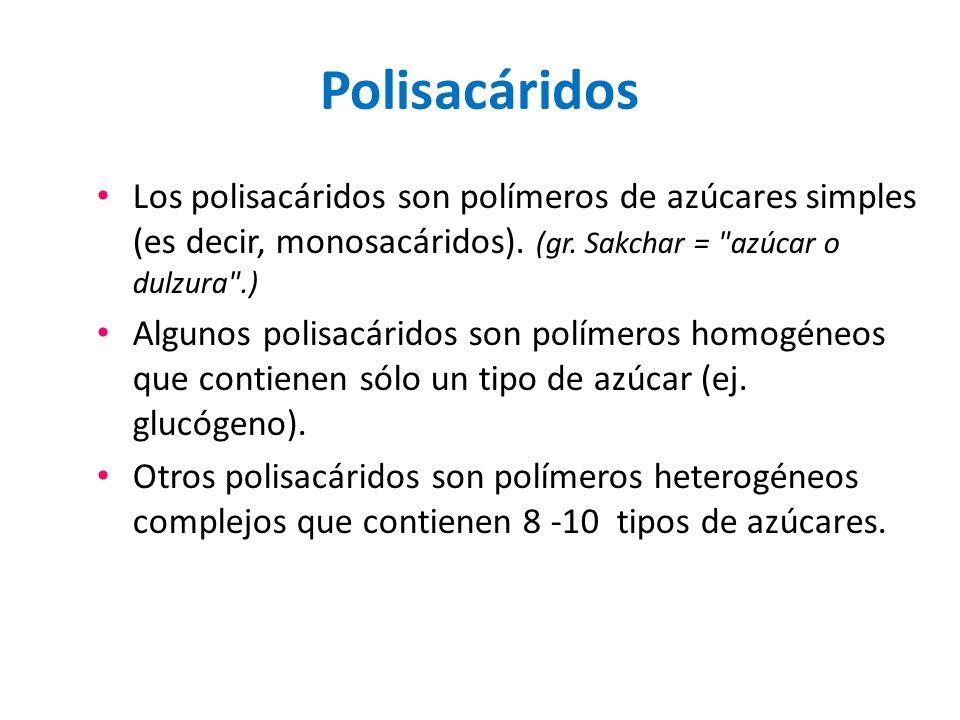 Polisacáridos Los polisacáridos son polímeros de azúcares simples (es decir, monosacáridos). (gr. Sakchar =