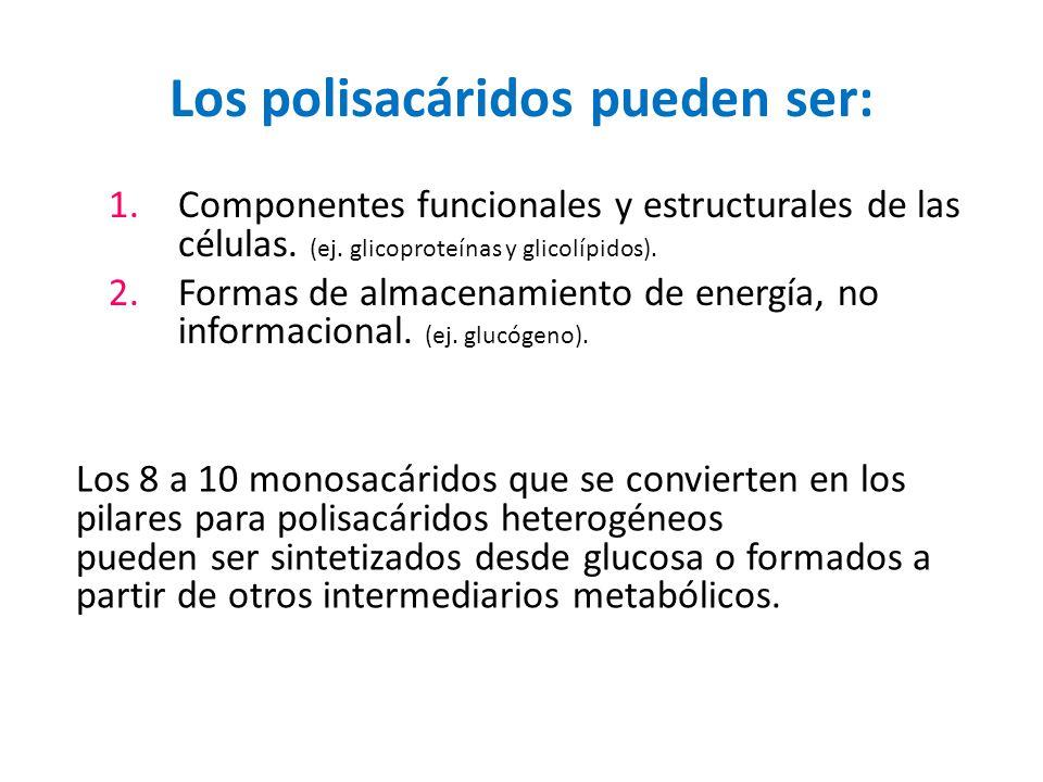 Los polisacáridos pueden ser: 1.Componentes funcionales y estructurales de las células. (ej. glicoproteínas y glicolípidos). 2.Formas de almacenamient
