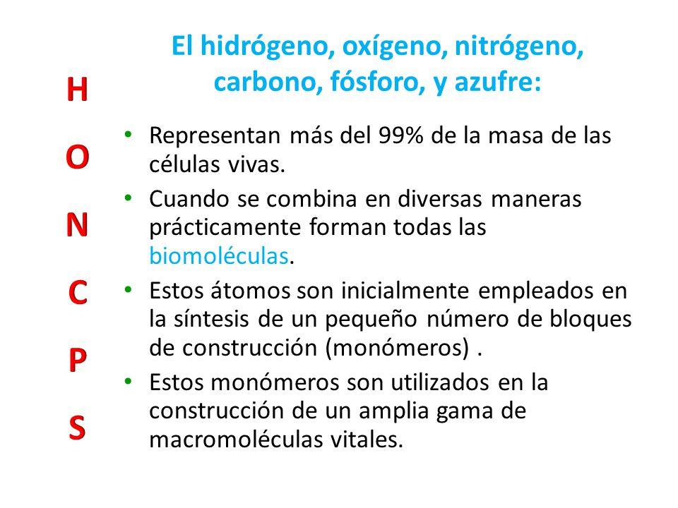 Lípidos Funciones: Componente de membranas (colesterol, glicolípidos y fosfolípidos).